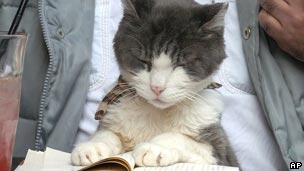 a cat reading a book